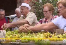 Llocnou de Sant Jeroni recupera l'escaldada del raïm 40 anys després (Informatiu nit À Punt)